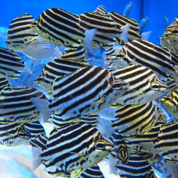 熱帯魚はどうにも食べる気がしないので見る。