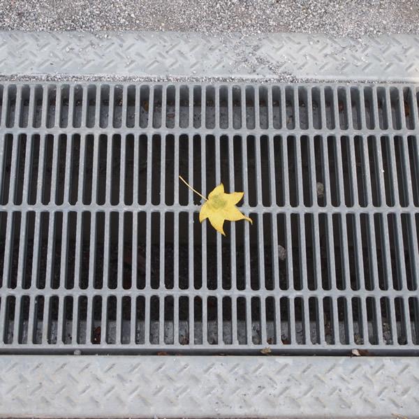 置いたわけではない、一枚の秋。